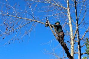 Baumpflege und Baumfällung in Tirol vom Meiser Florian Spiegl in Inzing